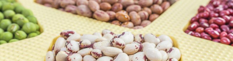 Onde encontrar proteína vegetal?