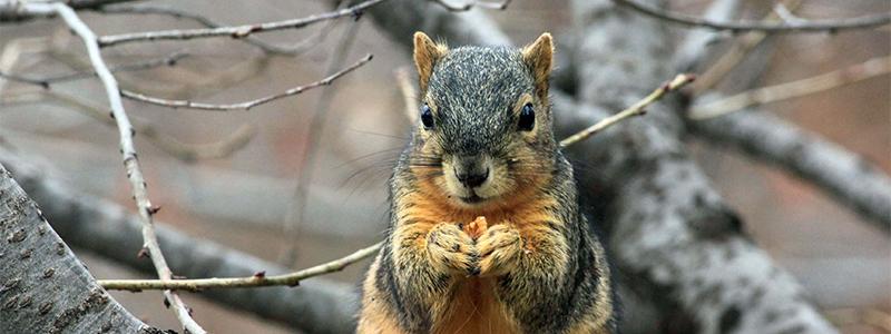 esquilo mais largo - 5 alimentos que irão reduzir o apetite de vegetarianos e veganos